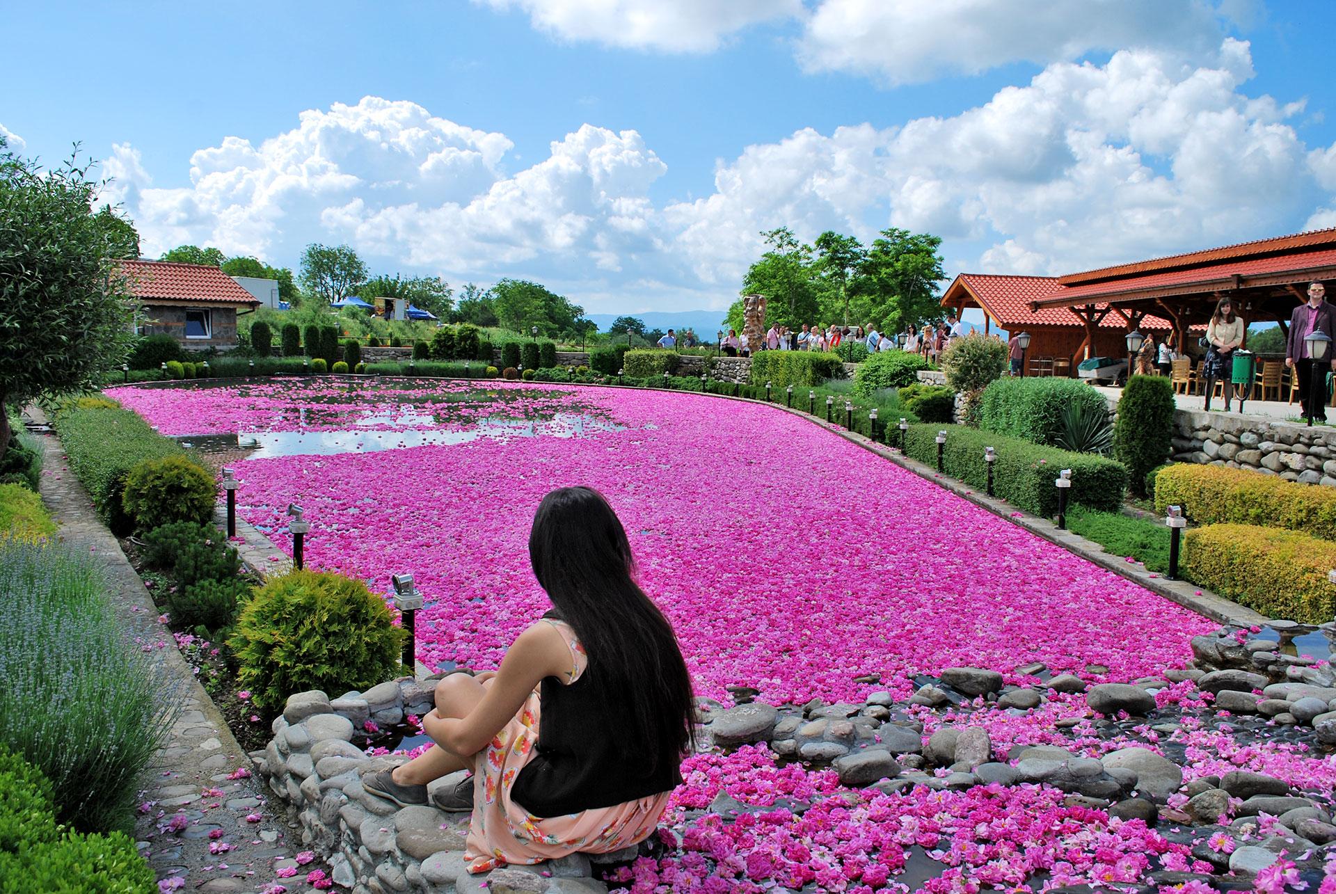 Rose Festival Pool