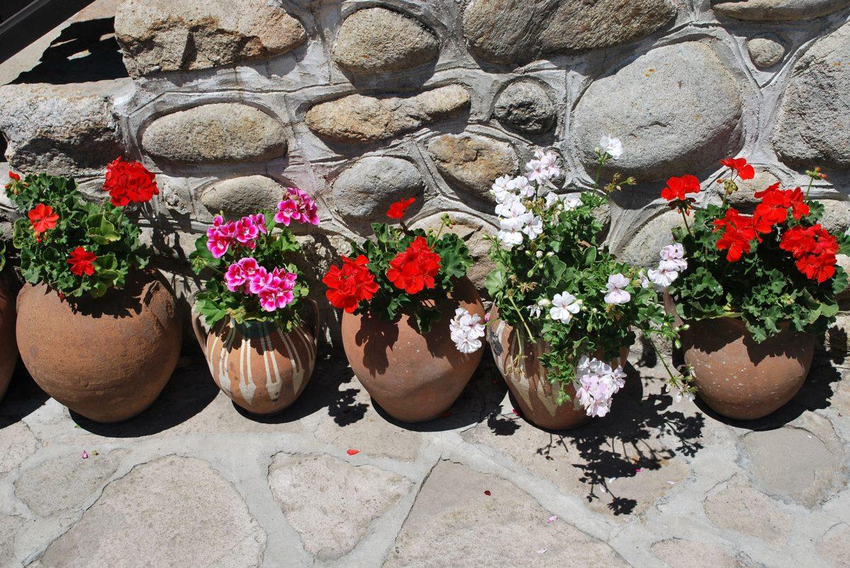 Flowers-in-Bansko
